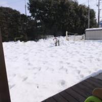 2014_02202-11雪かき