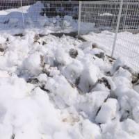 2014_02252-13雪起こし