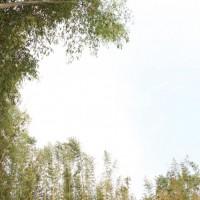 ランの周りの竹林です