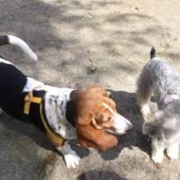 2014_04014-1ギンとマロンちゃん
