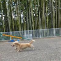 2014_06146-7ハナちゃん